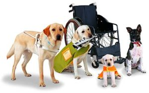 service_dogs_2