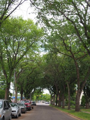 Tree-lined streets, Norwood, Edmonton