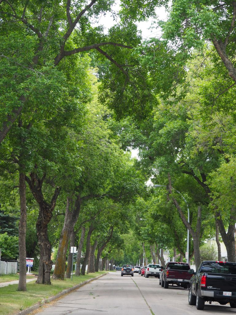 Tree-lined Streets of Norwood, Edmonton