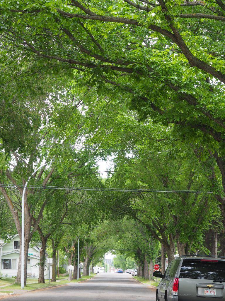 Tree-lined Streets, Norwood, Edmonton
