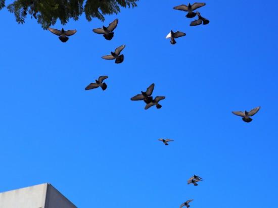 Downtown Birds