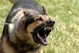 https://commons.wikimedia.org/wiki/File:Military_dog_barking.JPG