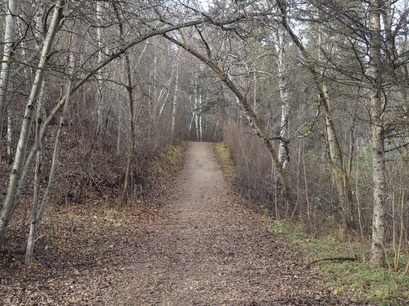 Trail beside Kinnaird Ravine