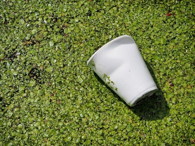 Litter Waste Discarded Cup Pollution Garbage