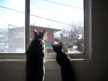 Looking Out the Window by Alisha Vargas via Flickr (CC BY 2.0)(