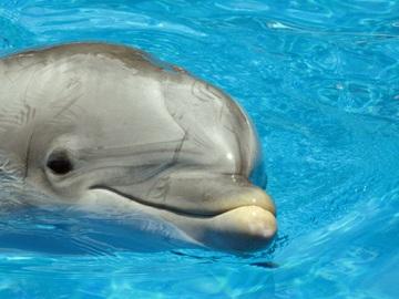 animal-biology-mammal-flipper-marine-vertebrate-762567-pxhere.com