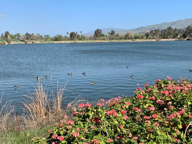 Lake Cunninghan, San Jose, CA