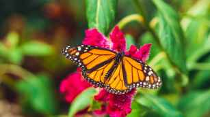 selective focus photography of orange butterfly